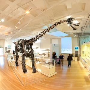 Dinosaur at New Walk Museum