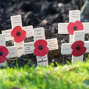Poppies and wooden crosses
