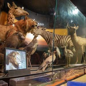 Animals at museum