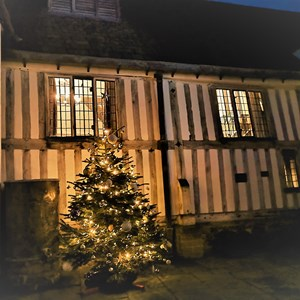 Guildhall tree